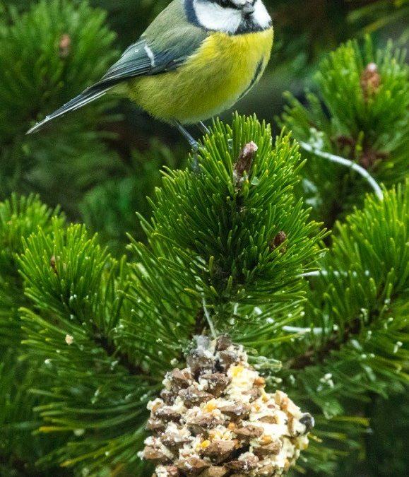 [DIY Activité Nature] Boules de graines pour les oiseaux