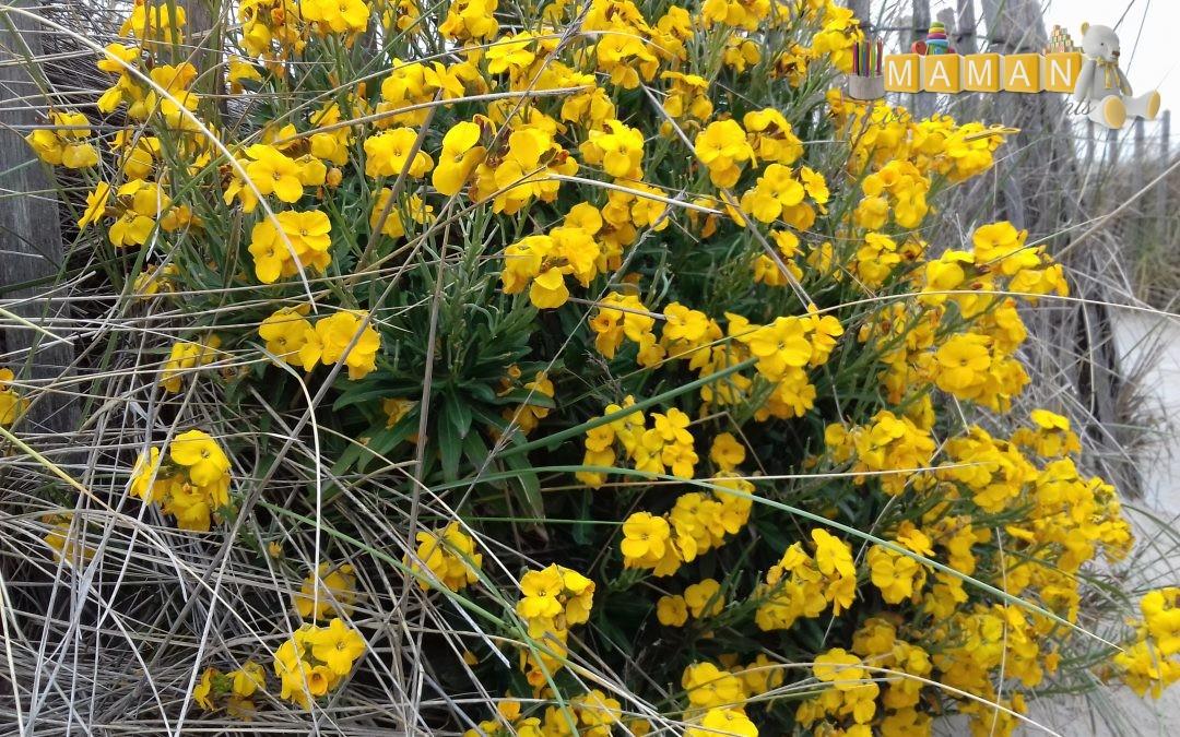 Les fleurs sauvages aux éditions Salamandre