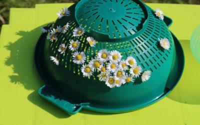 Motricité fine avec des pâquerettes et une passoire : Vive le printemps !